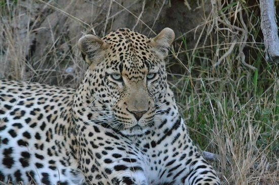 Pondoro Game Lodge: Leopard