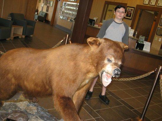 Bull Shoals Dam: Bear inside the GAston Visitor center
