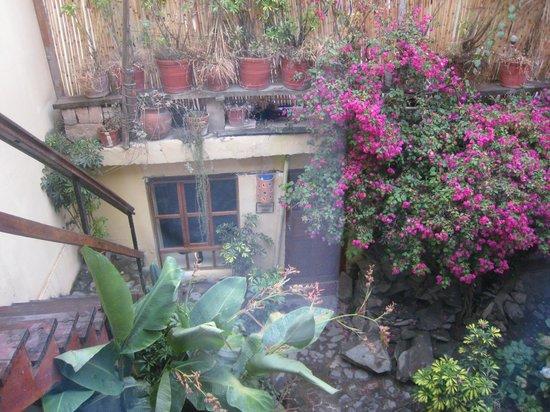 KB Tambo Hostal: Garden view