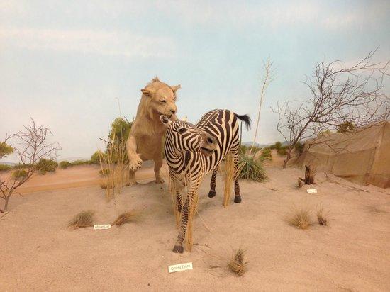 Rosenbruch Wildlife Museum : Africa Desert-Lion, Zebra