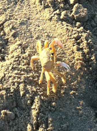 South Beach Inn: Crab on path to the beach