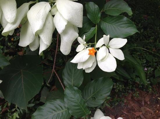Senator Fong's Plantation and Gardens : One of many beautiful flowers