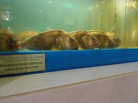 Kirin Mandarin Restaurant: These fish didn't look very appetizing.