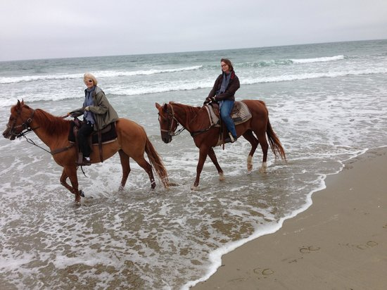 Monterey Bay Equestrian Center: Horses - Sonny & Scarlet
