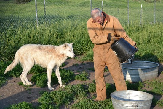 Howlers Inn Bed & Breakfast and Wolf Sanctuary: Dinner time!