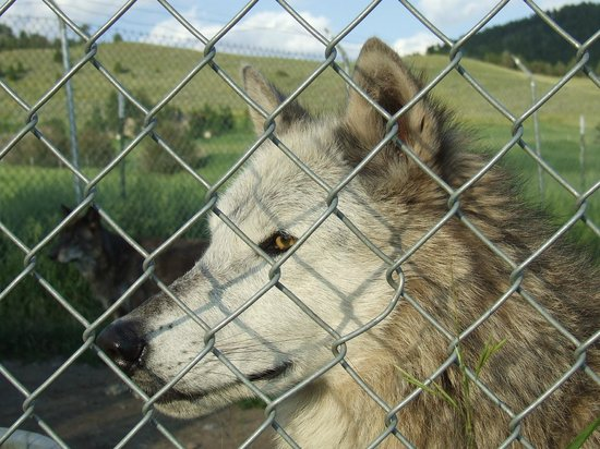 Howlers Inn Bed & Breakfast and Wolf Sanctuary: Gorgeous!