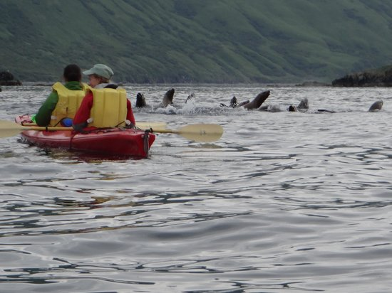 Spirit of Alaska Wilderness Adventures Lodge: kayaking with sea lions
