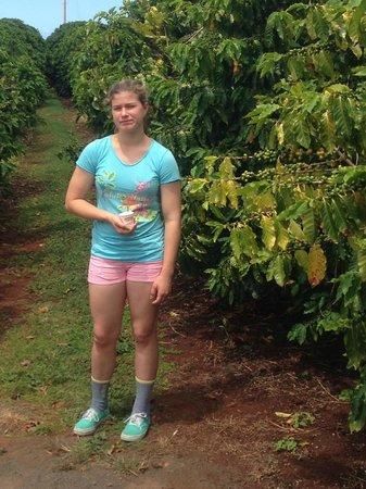 Kauai Coffee Company: pose by coffee trees on tour
