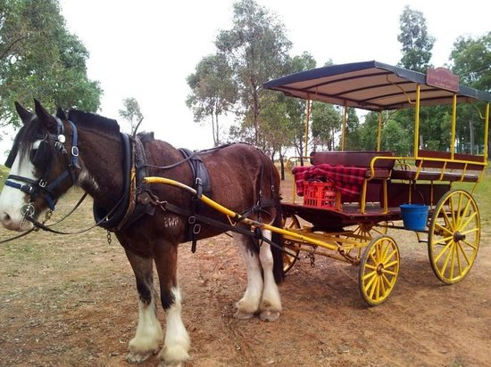 Hunter Valley Classic Carriages : The best way to tour the Hunter wineries
