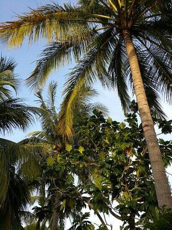 Sunset Beach Resort: garden
