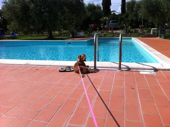 Agriturismo Poggio del Sole: Accettano i cani e questo è positivissimo!!