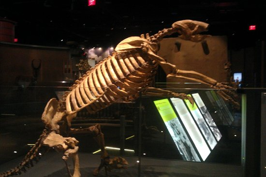 Nevada State Museum & Historical Society: Little Head, Big Body Fossil