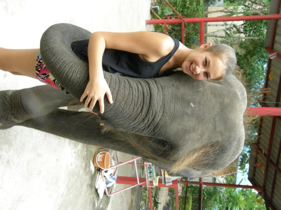 Hutsadin Elephant Foundation: Ella and Songkran