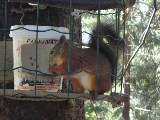 Freilichtmuseum Seurasaari: Feeding home for the wild squirrel as maintance by some animal lover