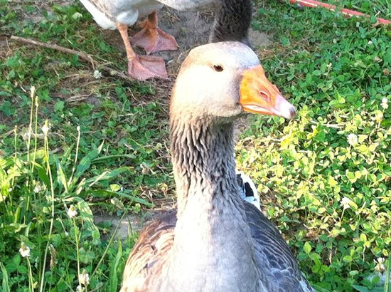 Auberge La Ferme du Brusquand : a farm friend