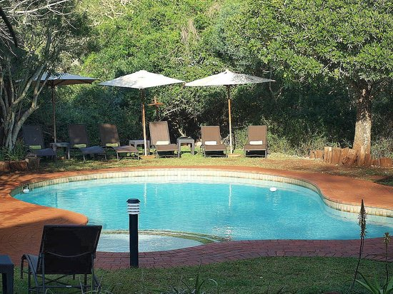 Zululand Safari Lodge : la piscine