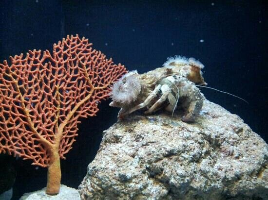 jeddah aquarium - Picture of Fakieh Aquarium, Jeddah - TripAdvisor