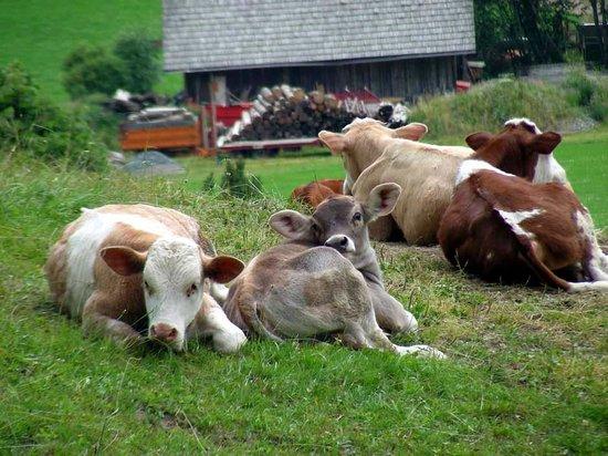 Wohlfuehl & Genusshotel Felsenhof: vitelli da guardia