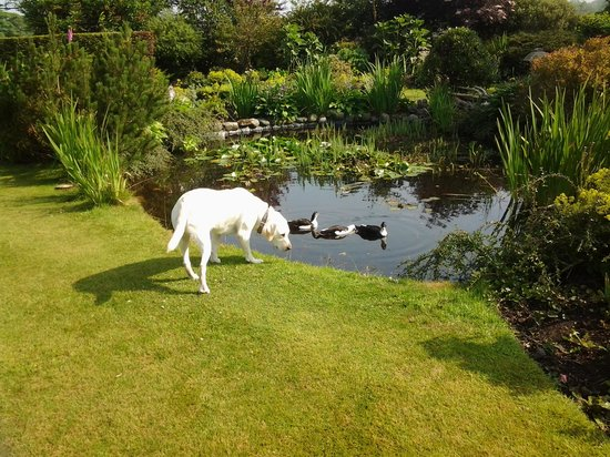 The Garden Cottage,: Sasha checking out life on the duck pond