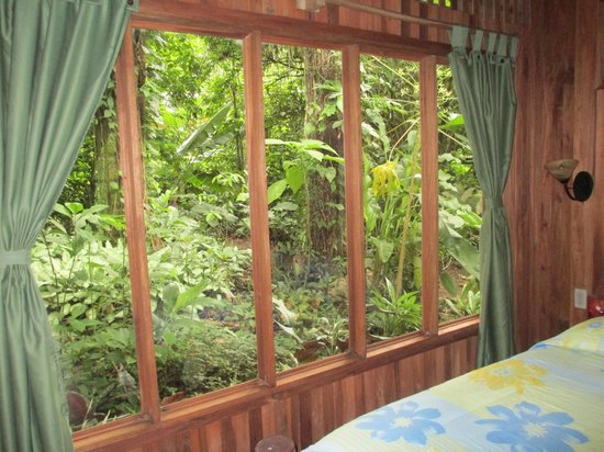 Arenal Oasis Eco Lodge & Wildlife Refuge: The forest view from my casita