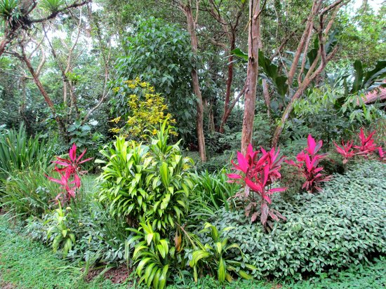 Arenal Oasis Eco Lodge & Wildlife Refuge: This property is surrounded by beautiful plant life.