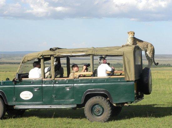 Mara Intrepids Luxury Tented Camp: Besuch im Busch