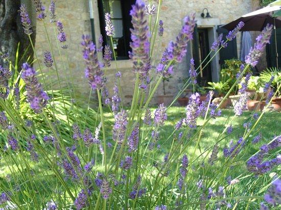 Domaine Saint Hilaire: Lavender