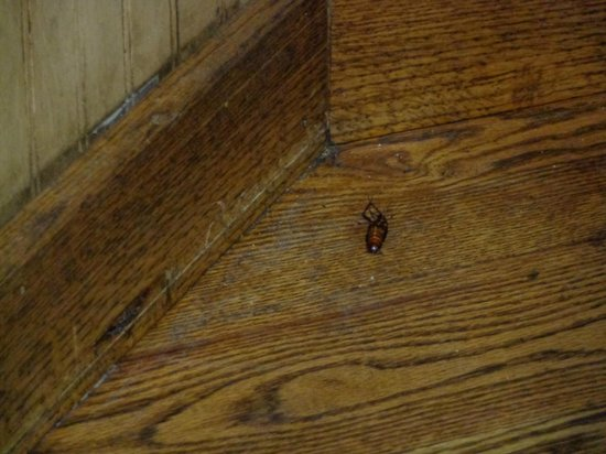 Farmhouse Restaurant: Cockroach on the Floor