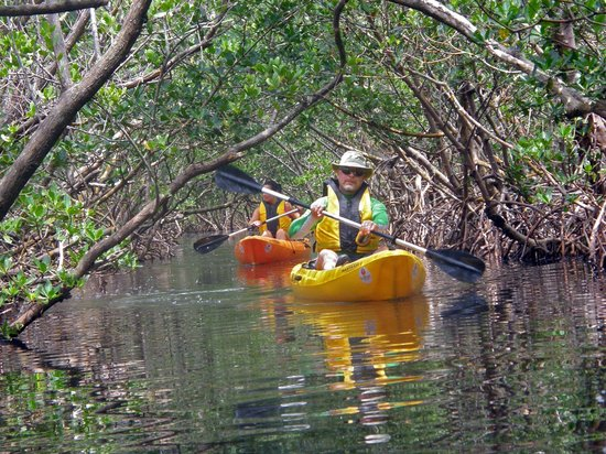 Rotonda West, FL: Kayaking the Woolverton Trail.