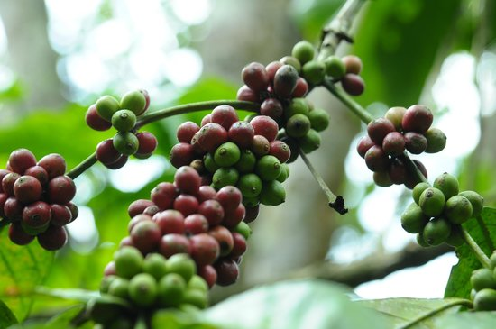 Good Morning Coffe Picture Of Deepa World Spice And Ayurvedic