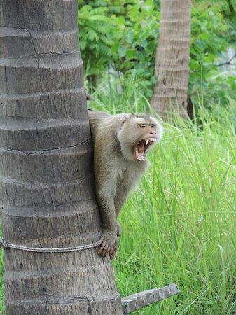 Samui Monkey Theatre