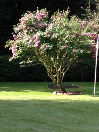 Chalet Motel & Apartments: Beautiful tree on the grounds