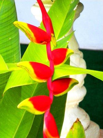 Sunset Resort & Villas : Exotic Flora on the grounds.