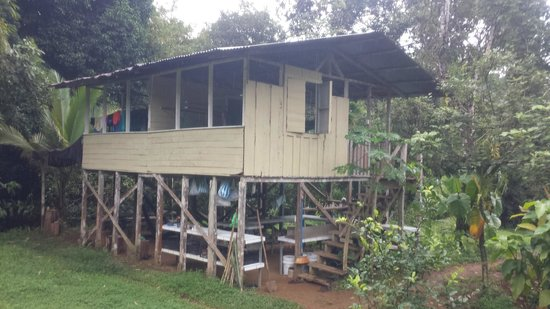 Bolita Hostel: Jungle Tree house