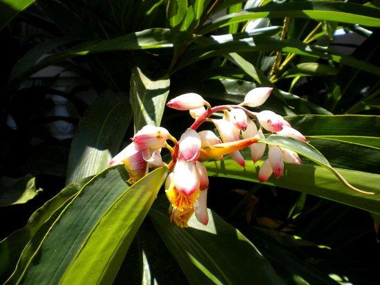 Sunset Resort & Villas: Caribbean Orchids