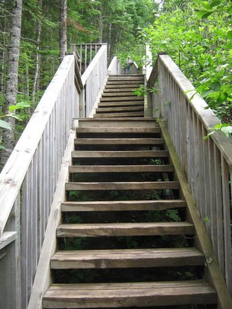 Judge C.R. Magney State Park : Some of the stairs!