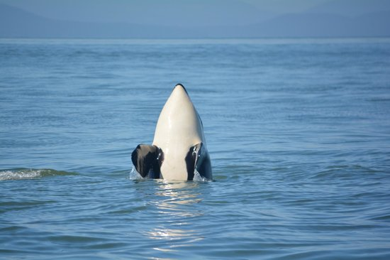 Vancouver Whale Watch: Wow!