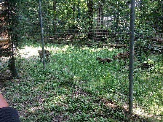 Le Parc des Felins : Parc des félins 5