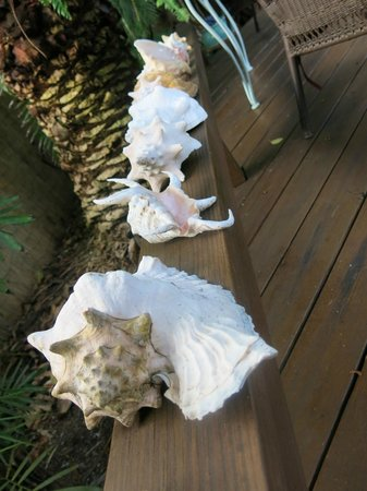 Atlantis House: conch collection