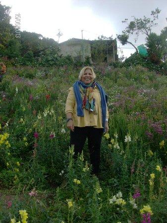 Parque Nacional el Avila: flores