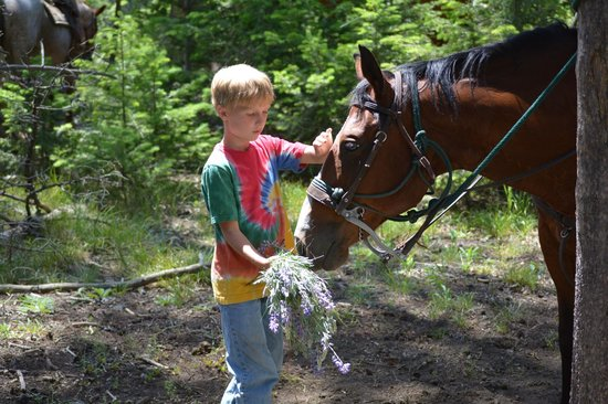Hawley Mountain Guest Ranch: Feeding horses on trail ride