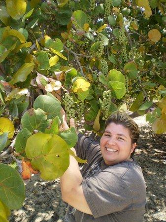 Hotel Villa Cabo San Antonio: uvas caletas