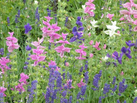 Seaton Delaval Hall: Floral display