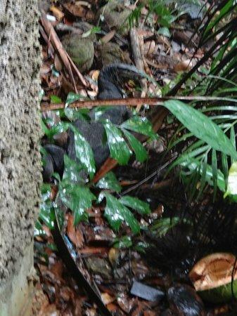 Angsana Bintan: Love nature