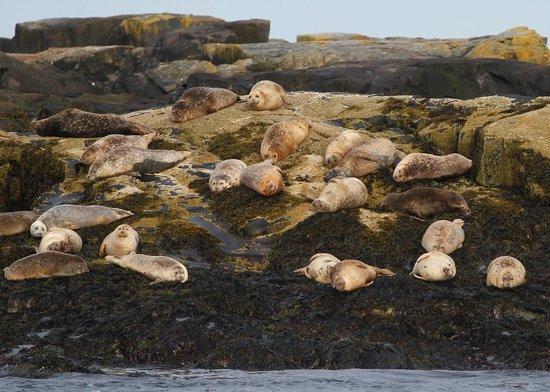 Islander Half-Day Fishing Trips: Basking harbor seals