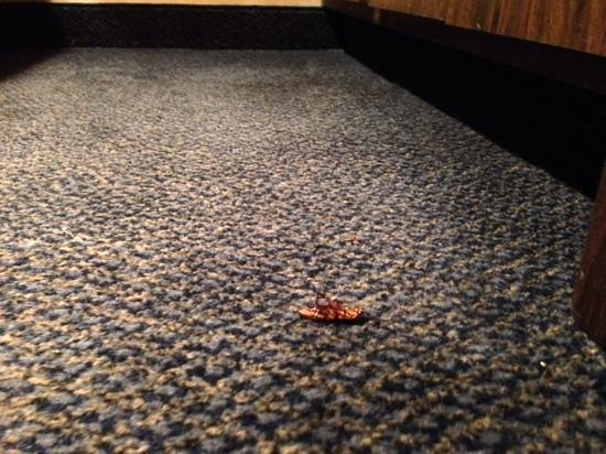 Super 8 Harrington: Roach motel