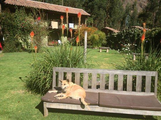 The Green House Peru: Mere hus fra haven med en af deres hunde