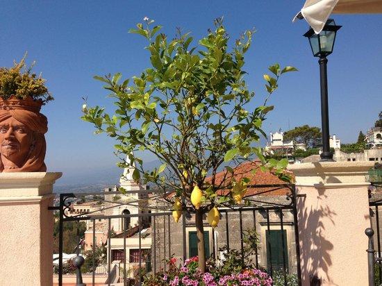 Casa Turchetti: Terrasse mit Zitronenbauemchen