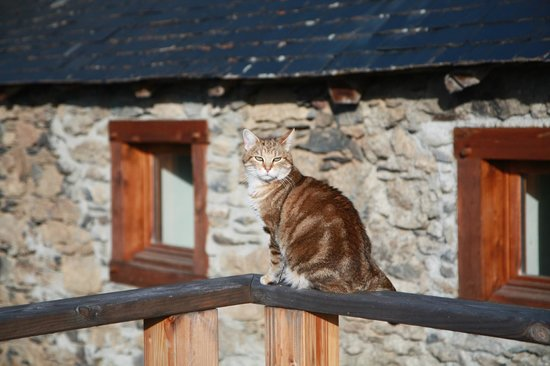 La Ferme De Soulan: le chat de la maison