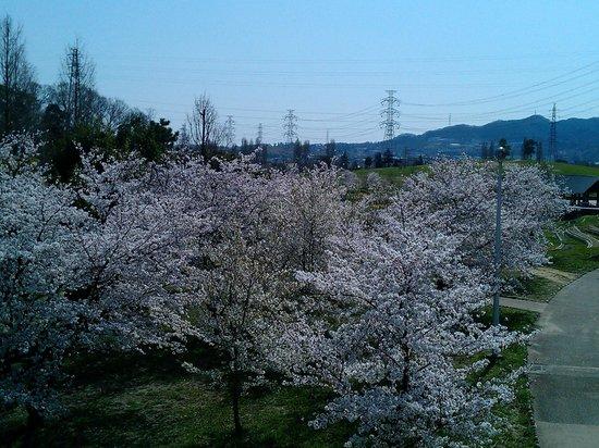 Yamadaike Park: 駐車場に近い川沿い